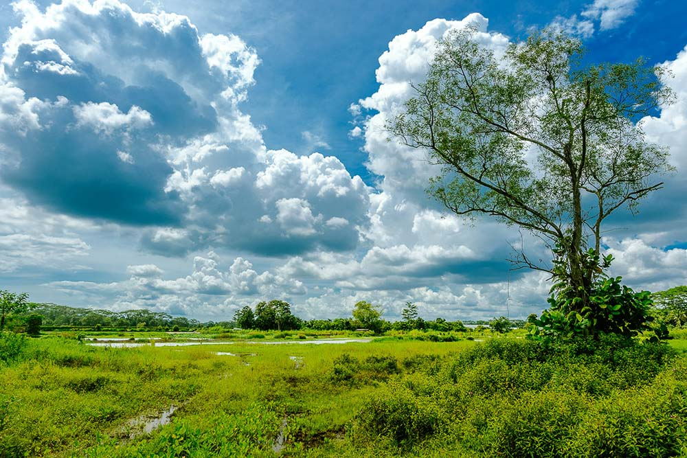 lone tree in swamp. nature photo of kranji marshes in singapore, by tuckys