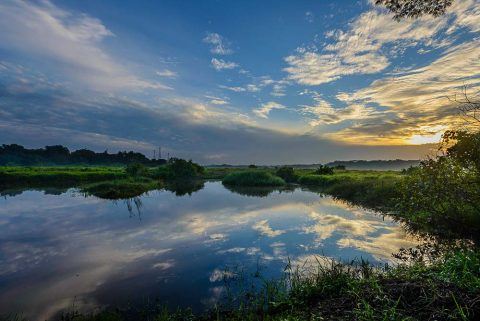 professional nature photo of water reflection at kranji marshes, singapore nature parks. by tuckys