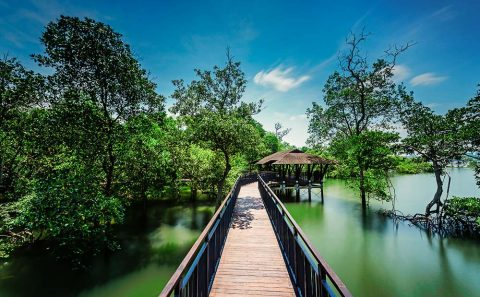 Singapore landscape architecture photographer at sungei buloh boardwalk and shelter, by tuckys