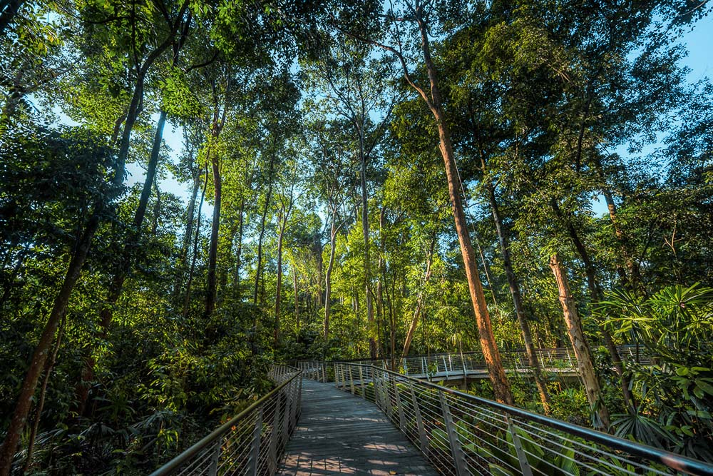 nature photography of tall trees in singapore botanical gardens, byu tuckys